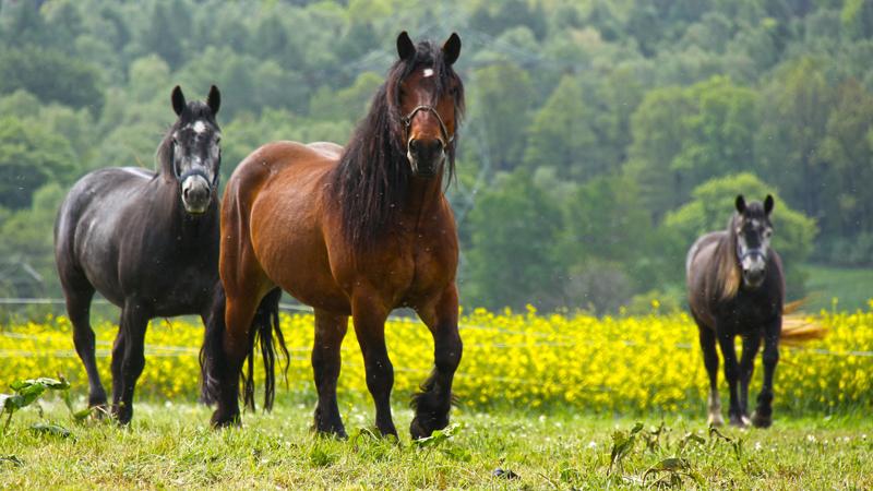 natural-health-sciences-arizona-oxygen-therapies-horses