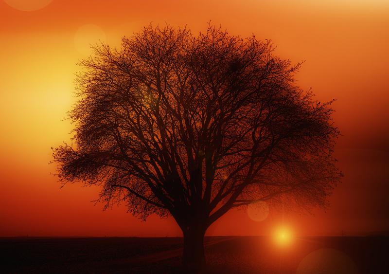 natural-health-sciences-arizona-oxygen-therapies-tree