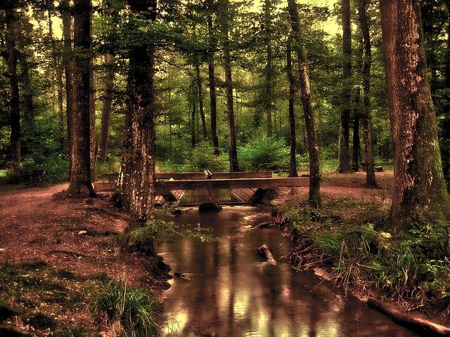 nhsoa-lyme-disease-prescott-az-woods