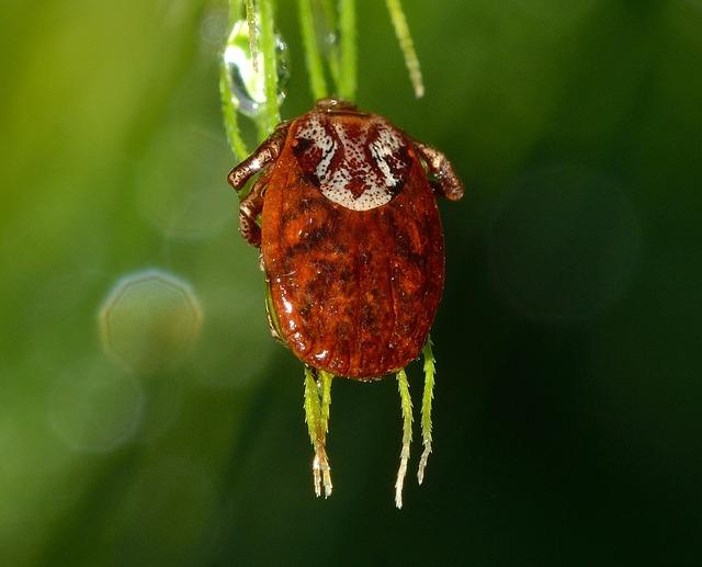 Lyme Disease An Increasing Concern
